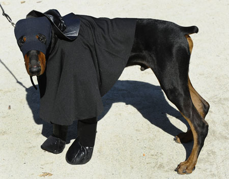 Fancy dress dogs parade Halloween costumes - TNT Magazine