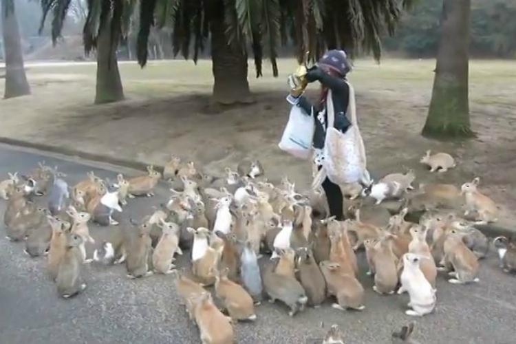 Rabbit Island Accommodation Japan